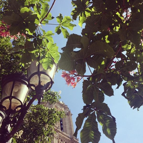 notre-dame-paris-cathedrale