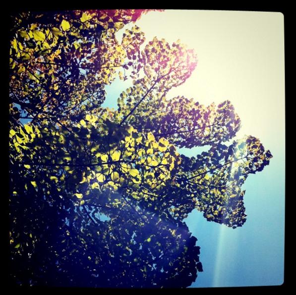sous-un-arbre-paris