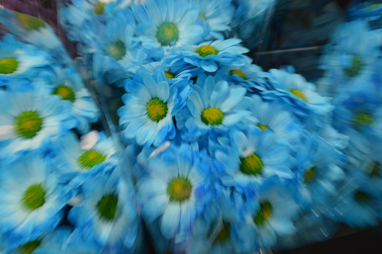 Zooming - fleurs bleues