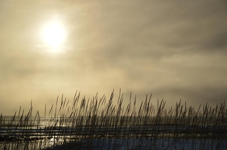 Vue sur la plage, Islande
